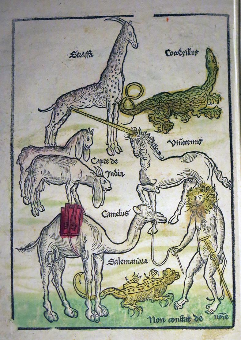 animaux fantastiques moyen age